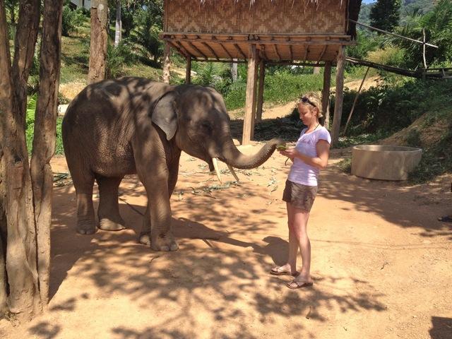 "elephant"""