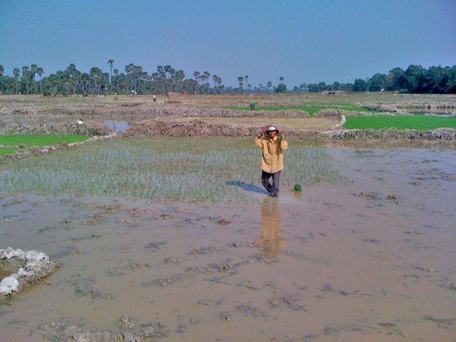 Les ferry une journ e la campagne chez sophal 2 - Quantite de riz par personne ...